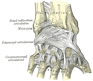 PortlandNaturopathicPhysicianTherapies